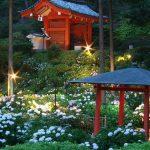 【スポット紹介】初夏の訪れを感じる 三室戸寺の紫陽花